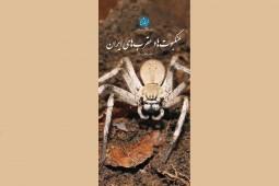 «عنکبوتها و عقربهای ایران» در یک کتاب گردآمدند/ از عنکبوتهای باستانی تا بابا لنگ دراز